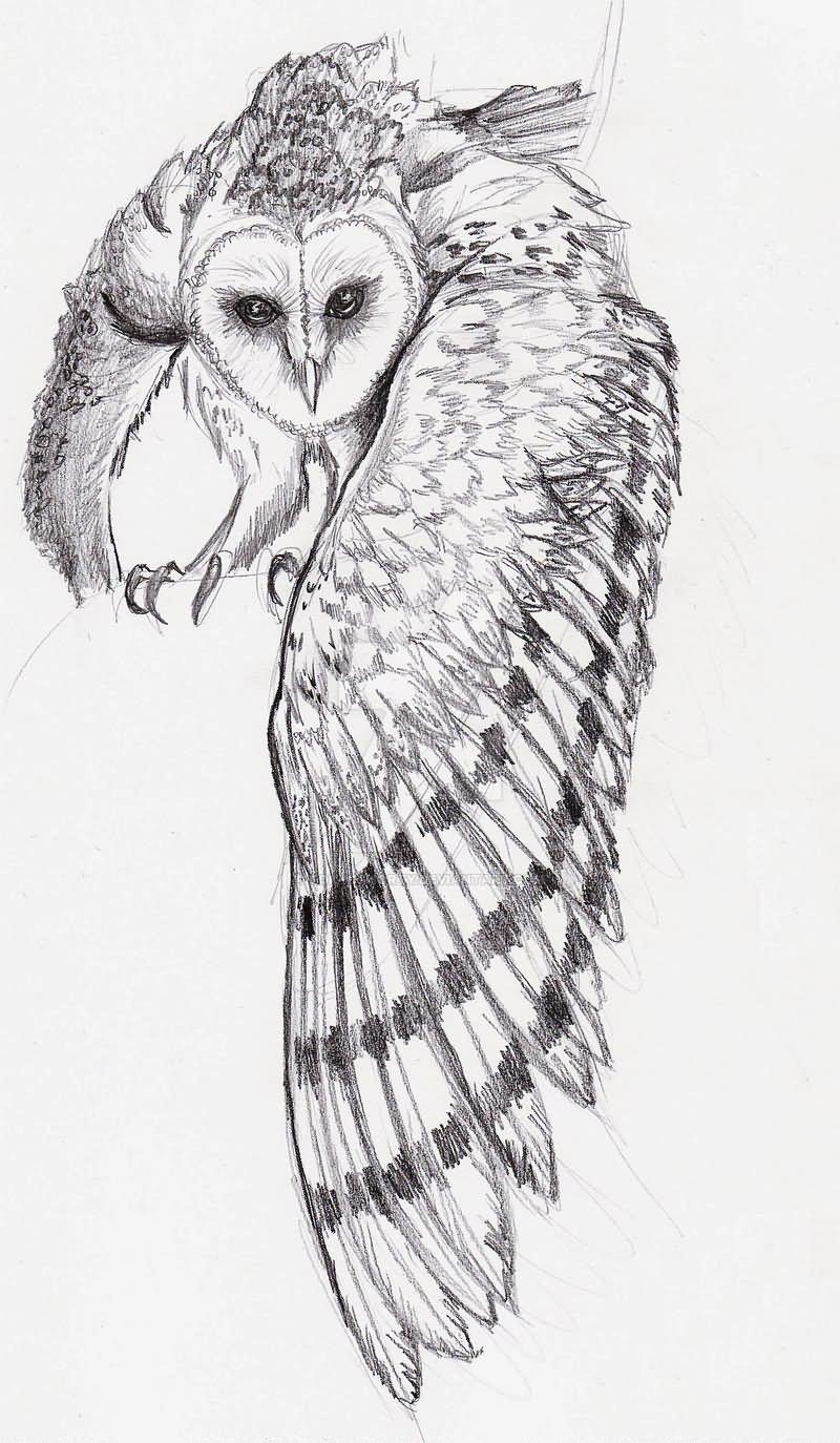 barn owl tattoo - HD800×1374