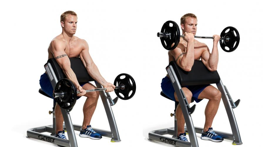 Best Preacher Curl Bench 2019 Attack The Back
