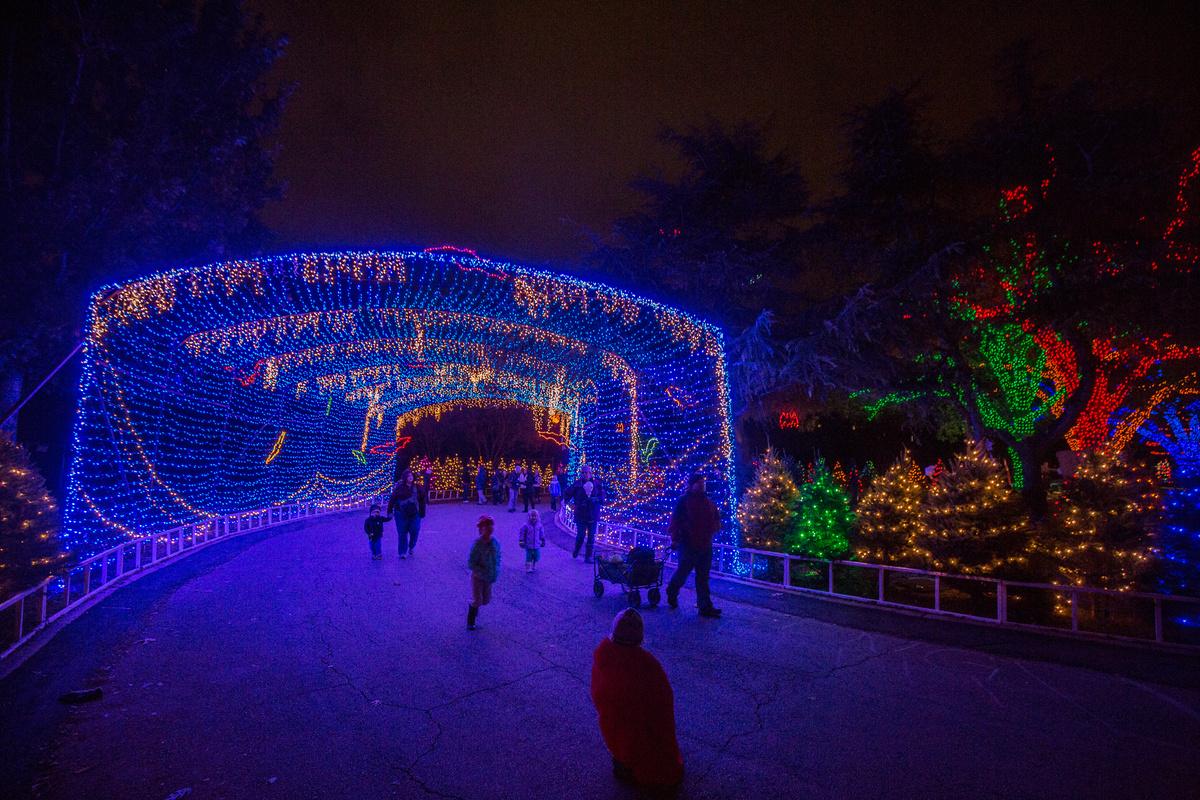 Zilker Trail Lights