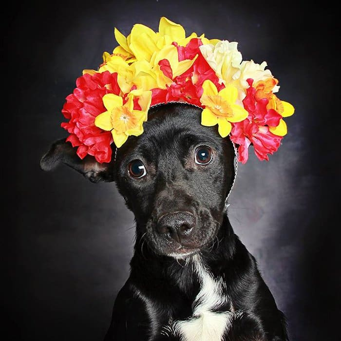 Guinnevere Shuster Helps Get Black Dogs Into New Homes