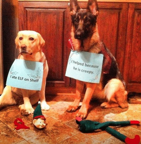 Elf on the Shelf dogs