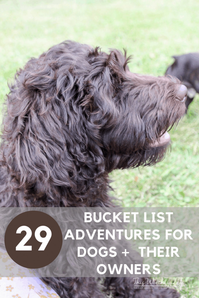 Taking an adventure with your dog is a great way to create special bonding time, as well as new memories for you and your best friend. We put together a bucket list of adventures to have with your dog, plus sharing our dog's favorite treats!29 Bucket List Adventures for Dogs + Their Owners