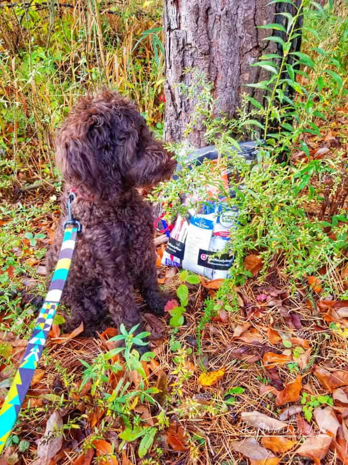 First Aid Essentials for Dogs