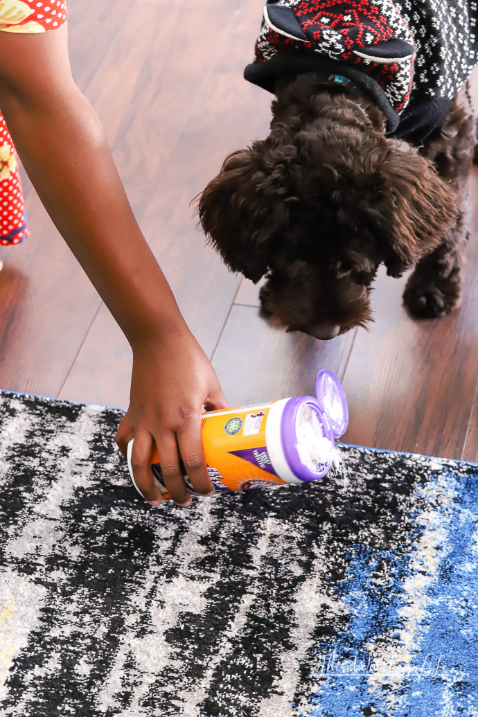 Tips on cleaning your house when you have pets