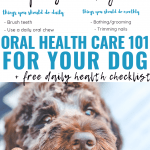Oral Healthcare 101 For your dog
