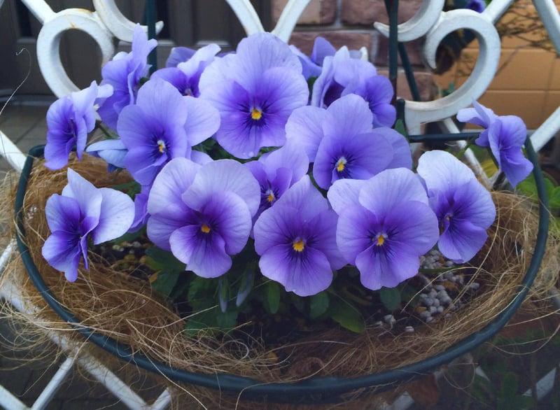 Terracotta Color Flower