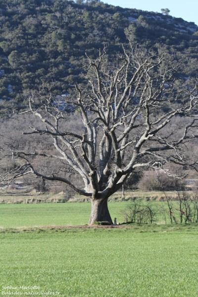 La Sainte-Baume – Balades naturalistes