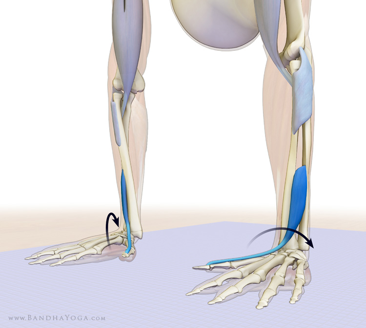 Medial Humeral Epicondyle Pain