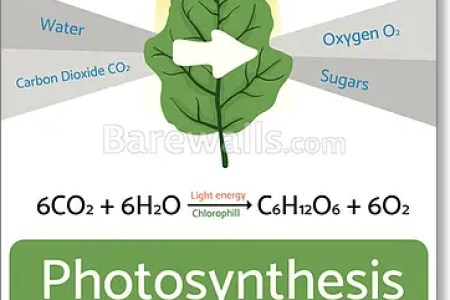 Interior photosynthesis chart hd images wallpaper for downloads photosynthesis more bite sized q as below venn diagram photosynthesis respiration yelom myphonecompany co venn diagram photosynthesis respiration ccuart Image collections