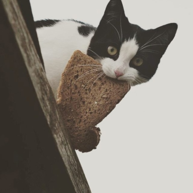 20 Funny Photos Cats Stealing Things Barnorama