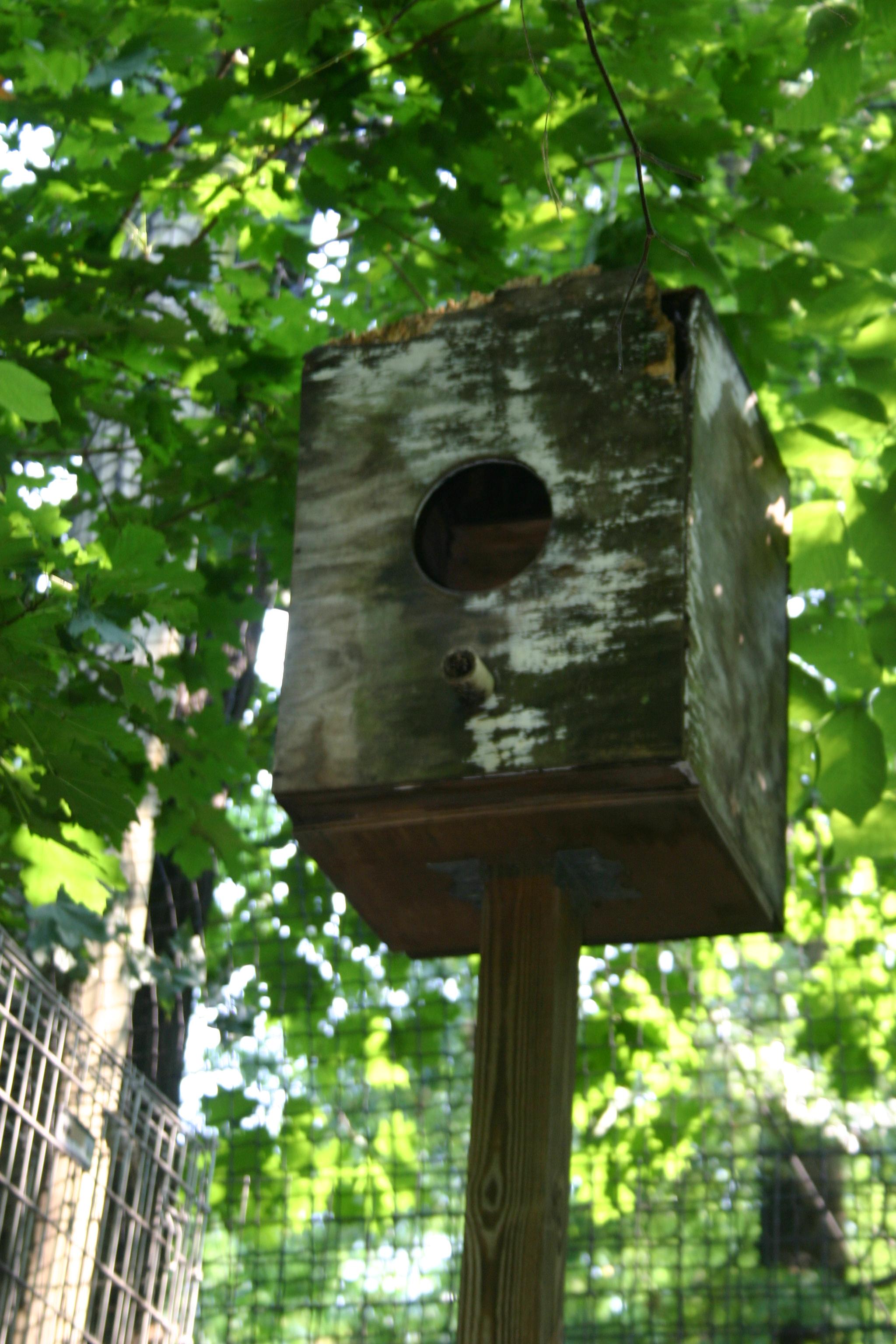 How to Build or Buy a Barn Owl Nest Box – Barn Owl Box Company