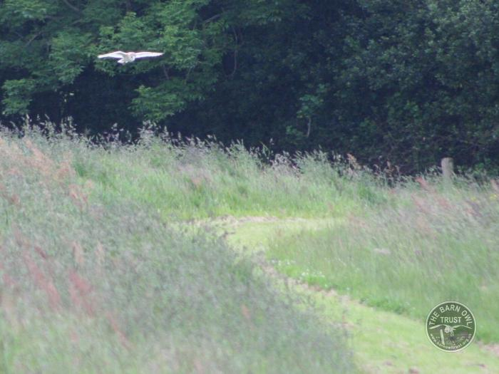 The Lennon Legacy Project wildlife haven - The Barn Owl Trust