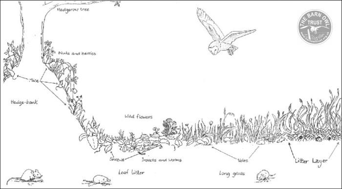 Barn Owl Habitat - The Barn Owl Trust