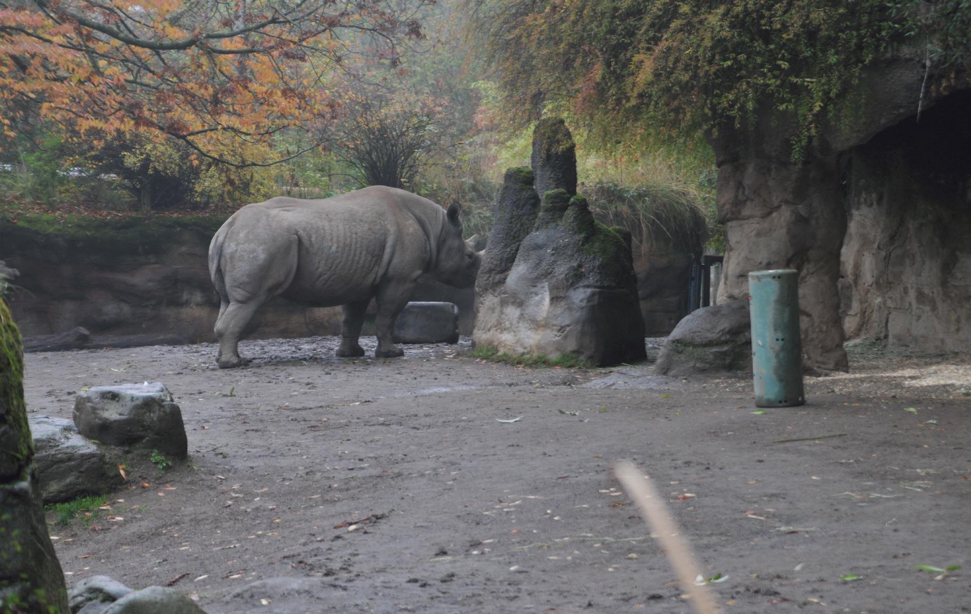 video portland zoo - HD1895×1200