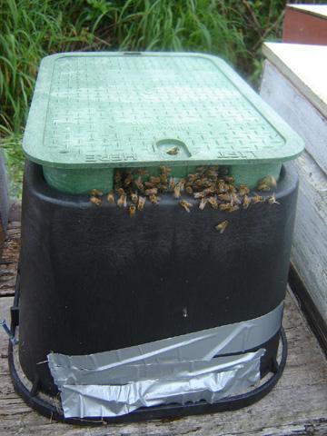 Unusual Honey Bee Infestations