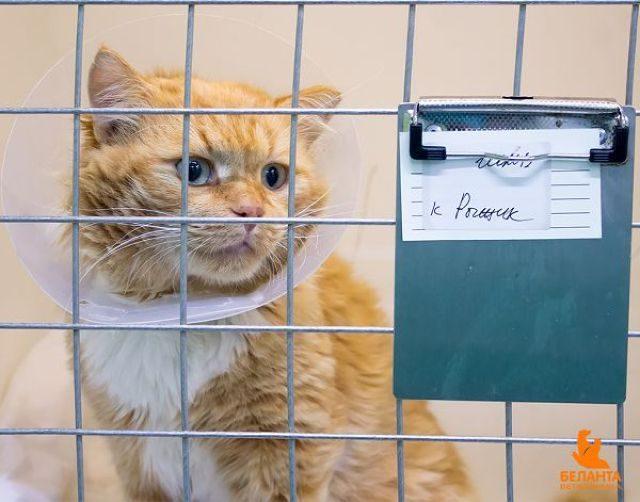 Gato vermelho em uma gaiola