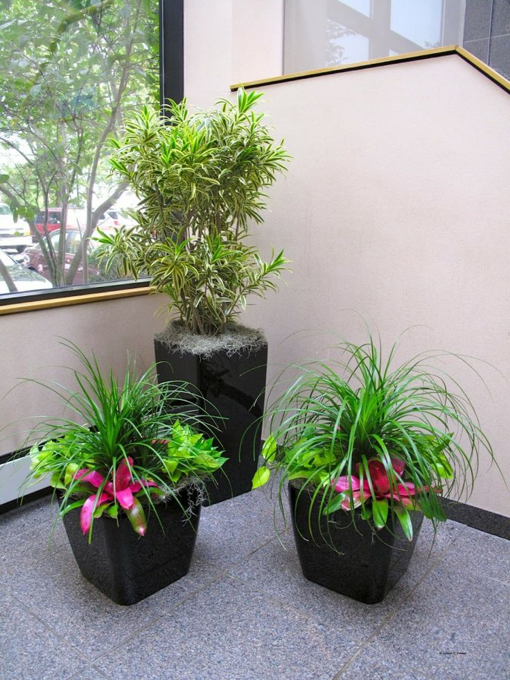 Residential Plant Sales for Sarasota  Bradenton   Osprey homes  Contact Info