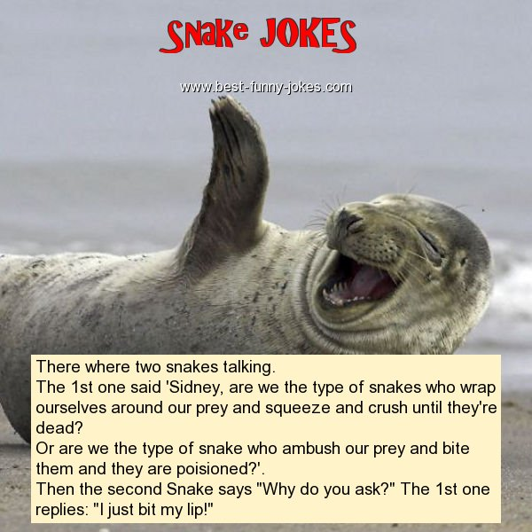Snake Jokes There Where Two Snak