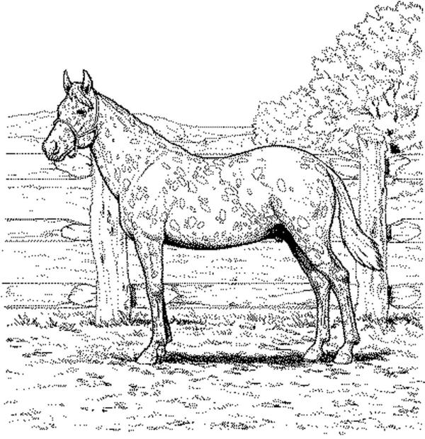 horse coloring pages # 49