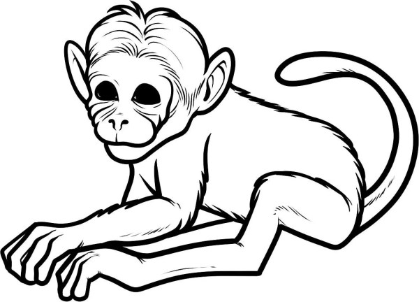 baby monkey coloring pages # 66