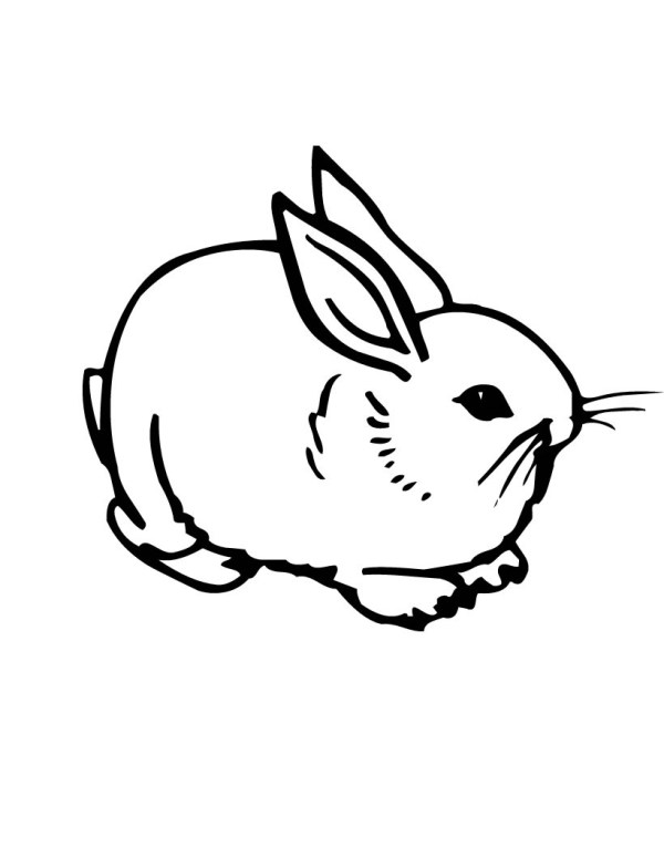 bunny rabbit coloring pages # 3
