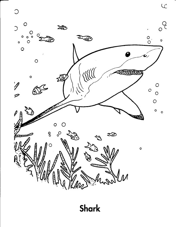 great white shark coloring page # 7