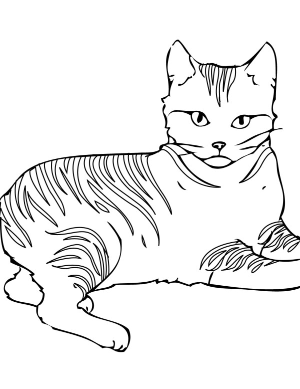 free cat coloring pages # 0