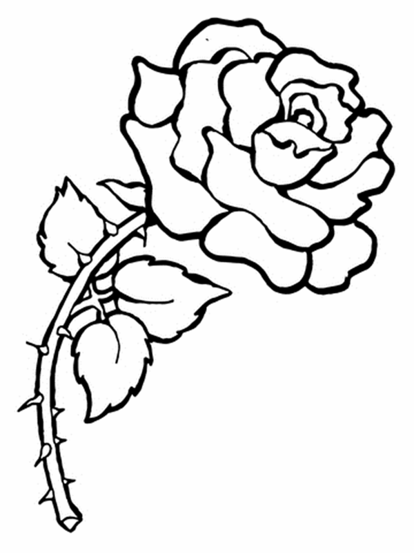 printable coloring pages of flowers # 6