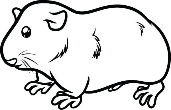 guinea pig coloring page # 7