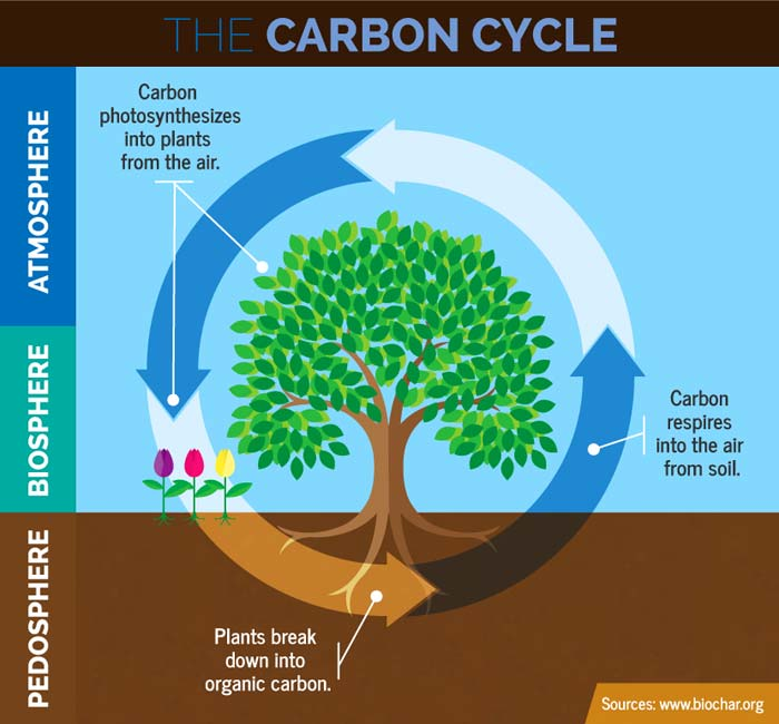 Steps Order Carbon Cycle