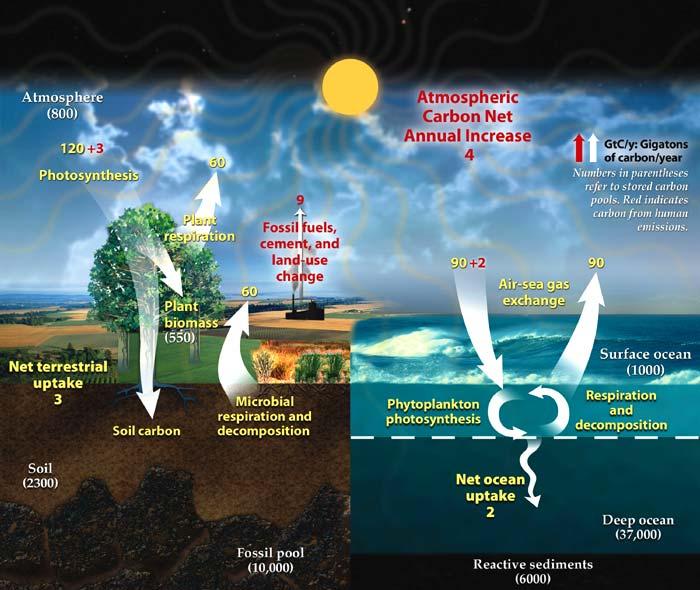 Explanation Water Cycle Diagram