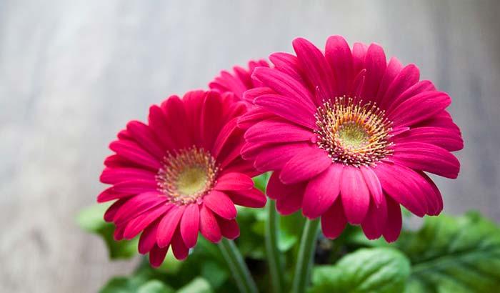 Non Flowering Ornamental Plants