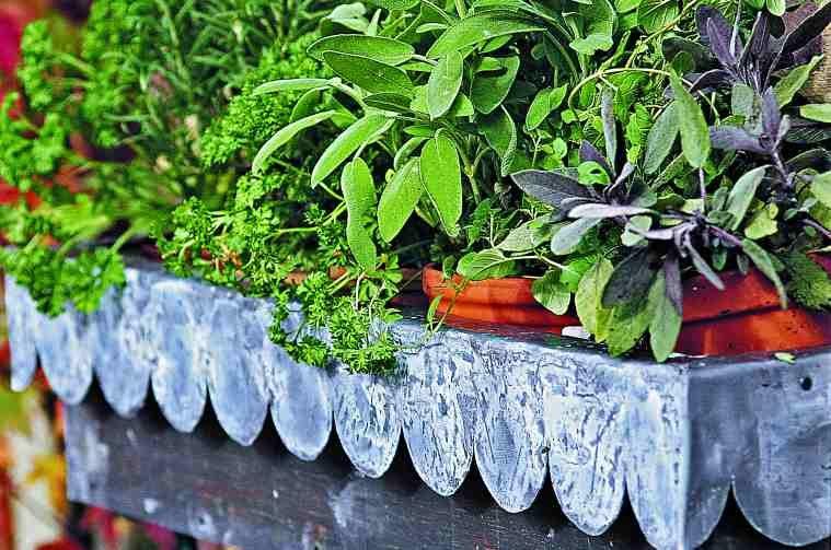 Flower Box Vegetable Garden