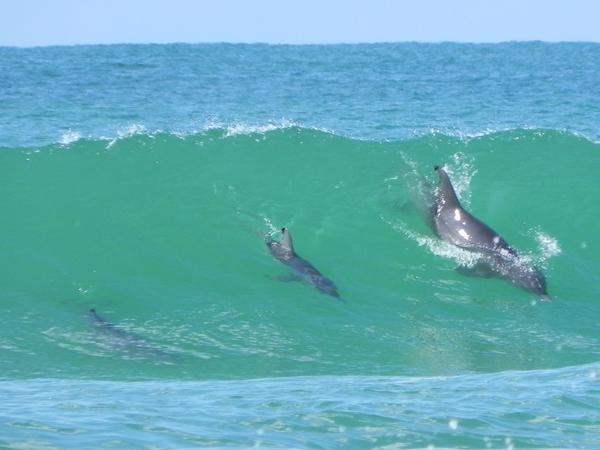 Surf Fishing Sharks Destin Florida