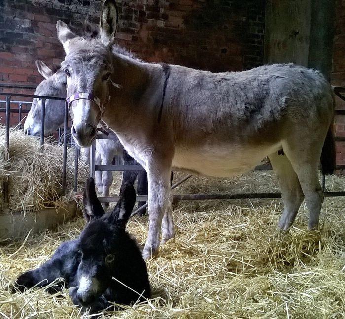 Farm Animals Bodenham Arboretum