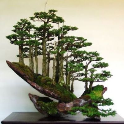 Top 8: Stunning Rock Bonsai trees - Bonsai Empire