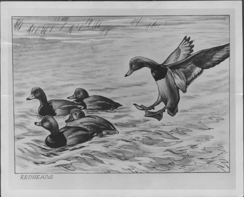 Print Federal 2014 Duck