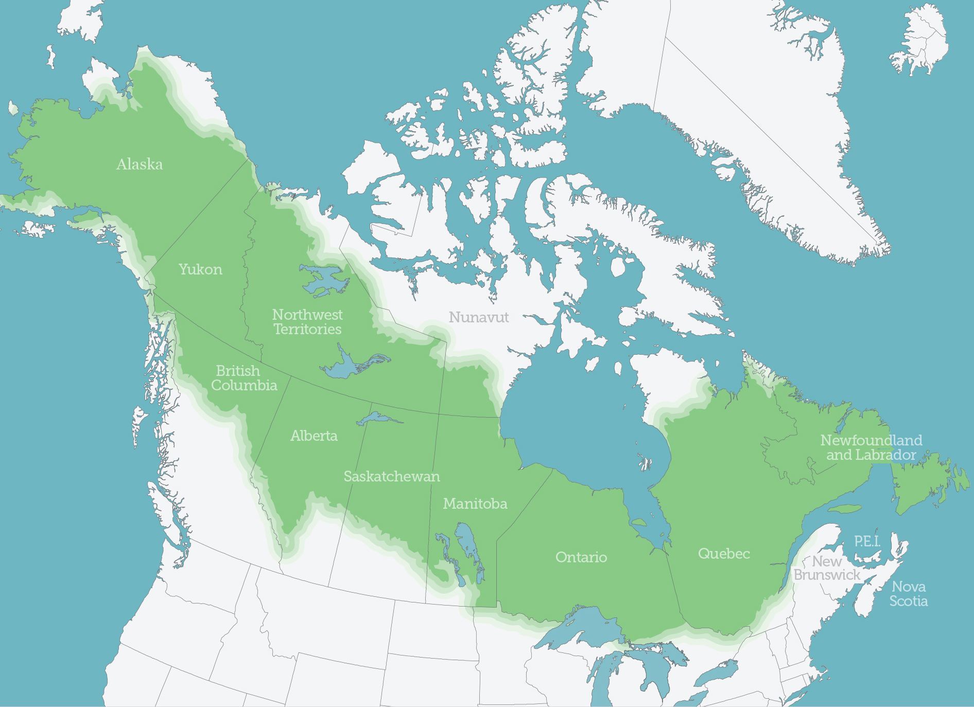 Boreal Forest | Boreal Songbird Initiative