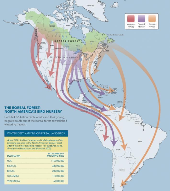 American South Rainforest Map