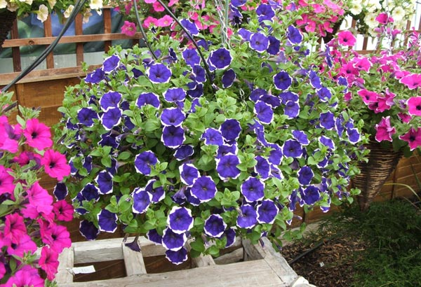 Plants Hanging Wall Baskets