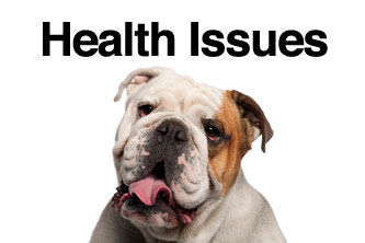 Ways to Reduce Health Care Costs of Your English Bulldog