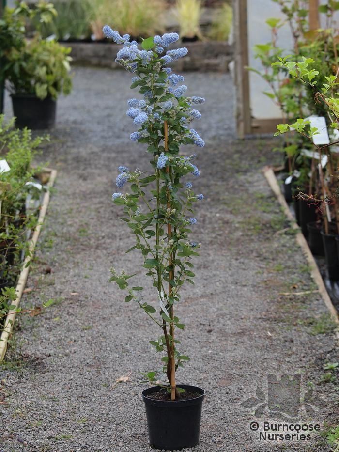 B Q Garden Plants And Shrubs