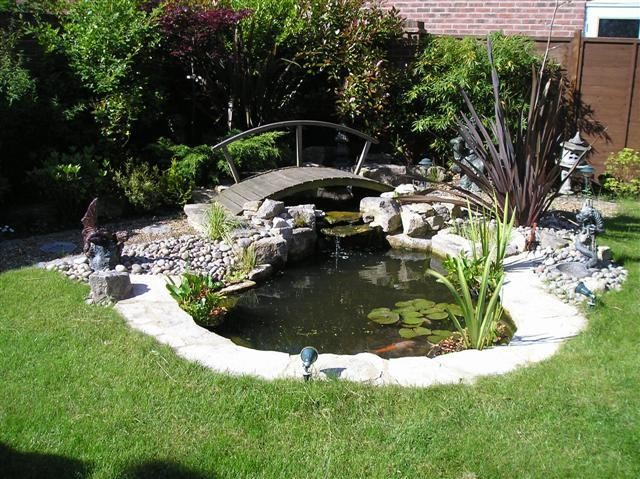 Best Plants Small Garden Pond