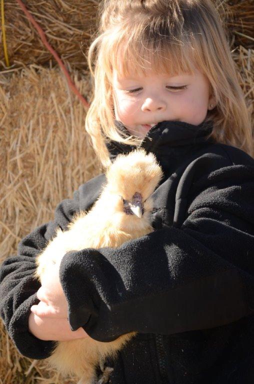 Female Silkie Chickens Sale