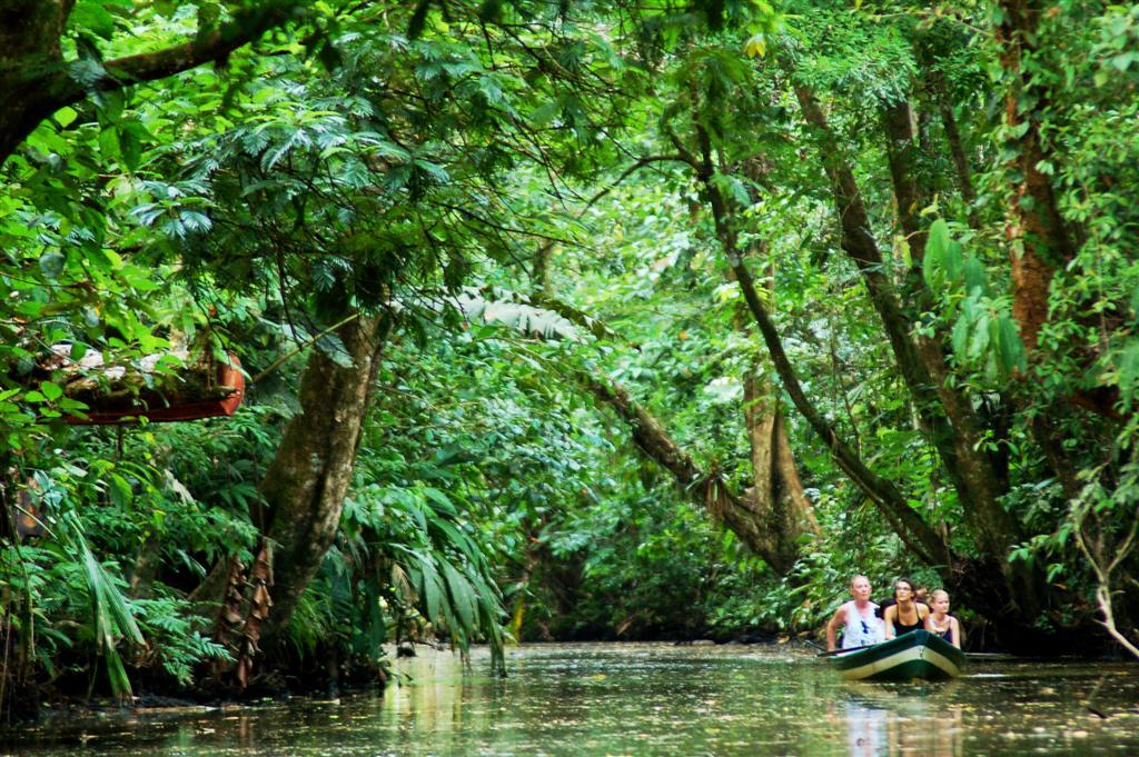 Facts Rica Costa Rainforest