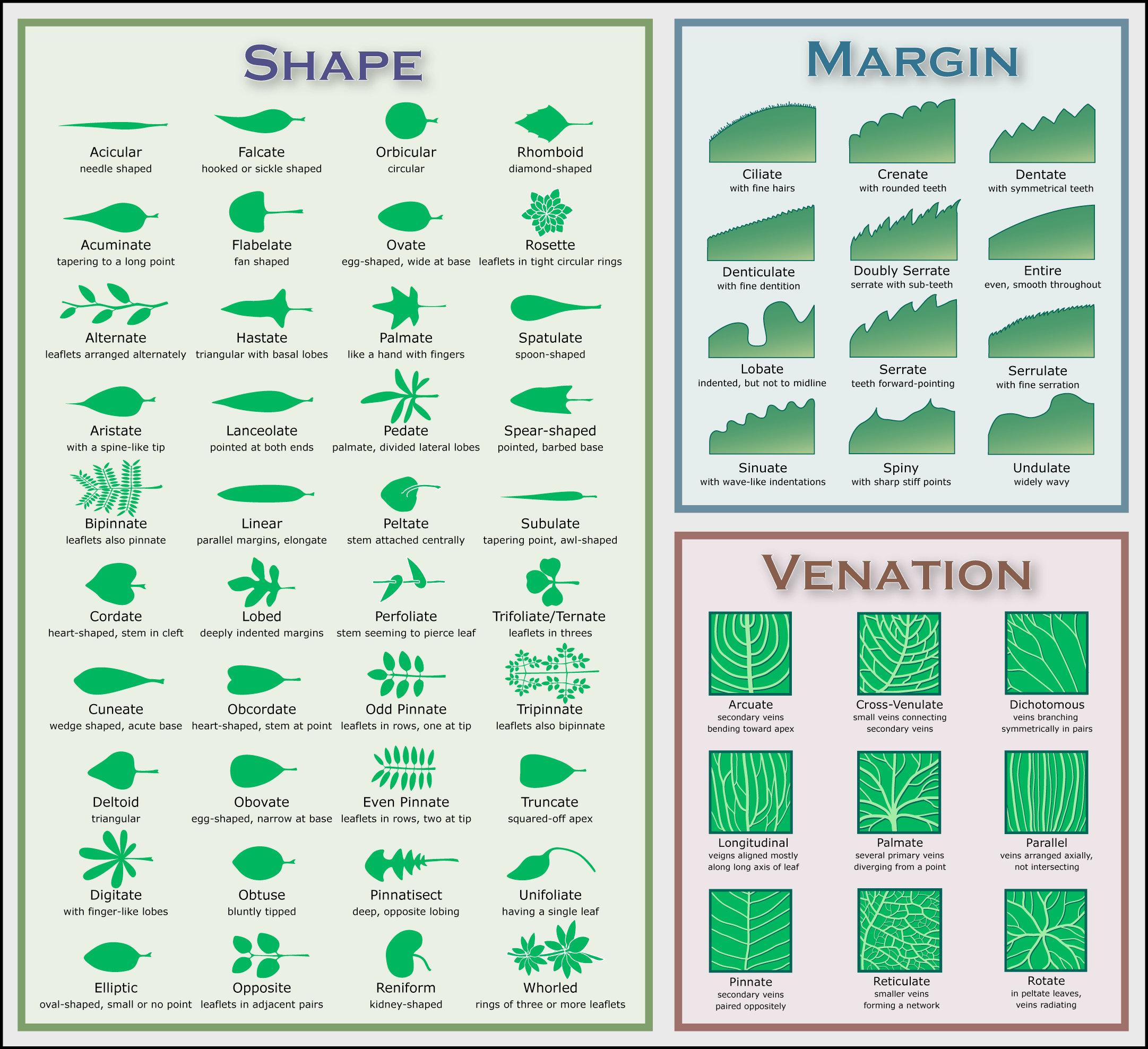 Best Kitchen Gallery: Leaf Chart « Native Plants For A Cape Cod Garden of House Plant Identification By Leaf Guide on rachelxblog.com