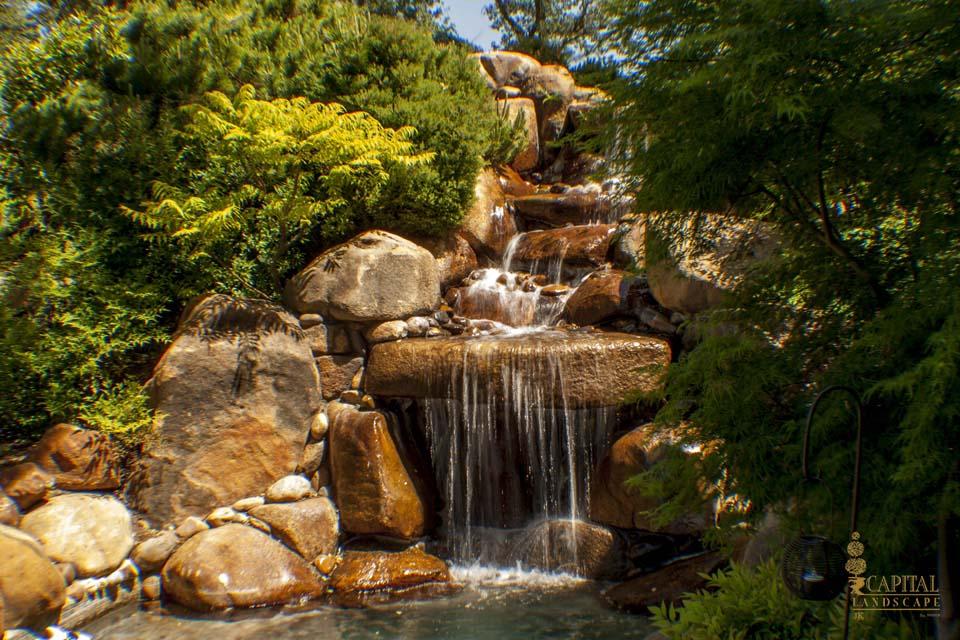Best Backyard Ponds