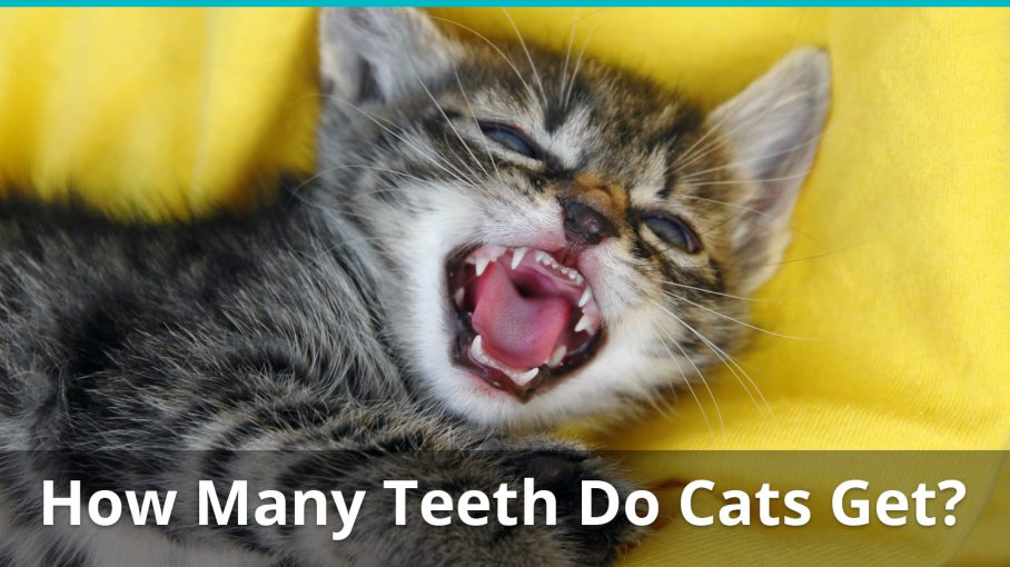How Many Teeth Does Human Have