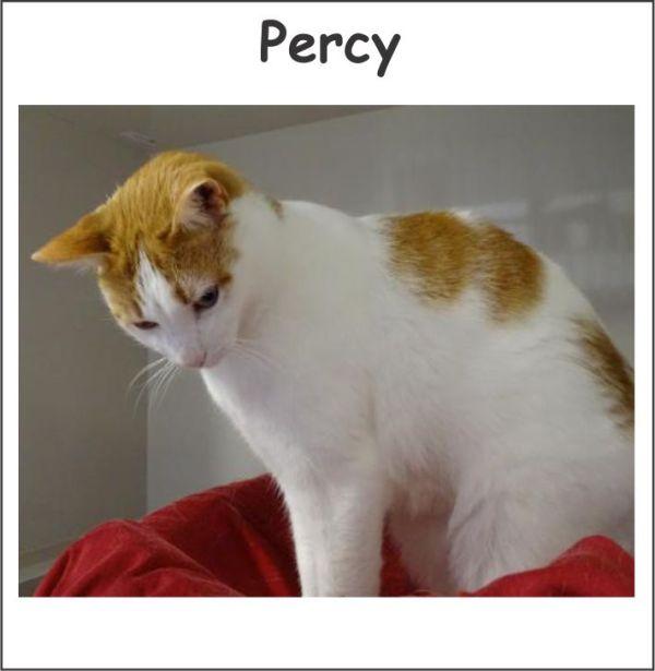 free cat sudbury ontario # 24