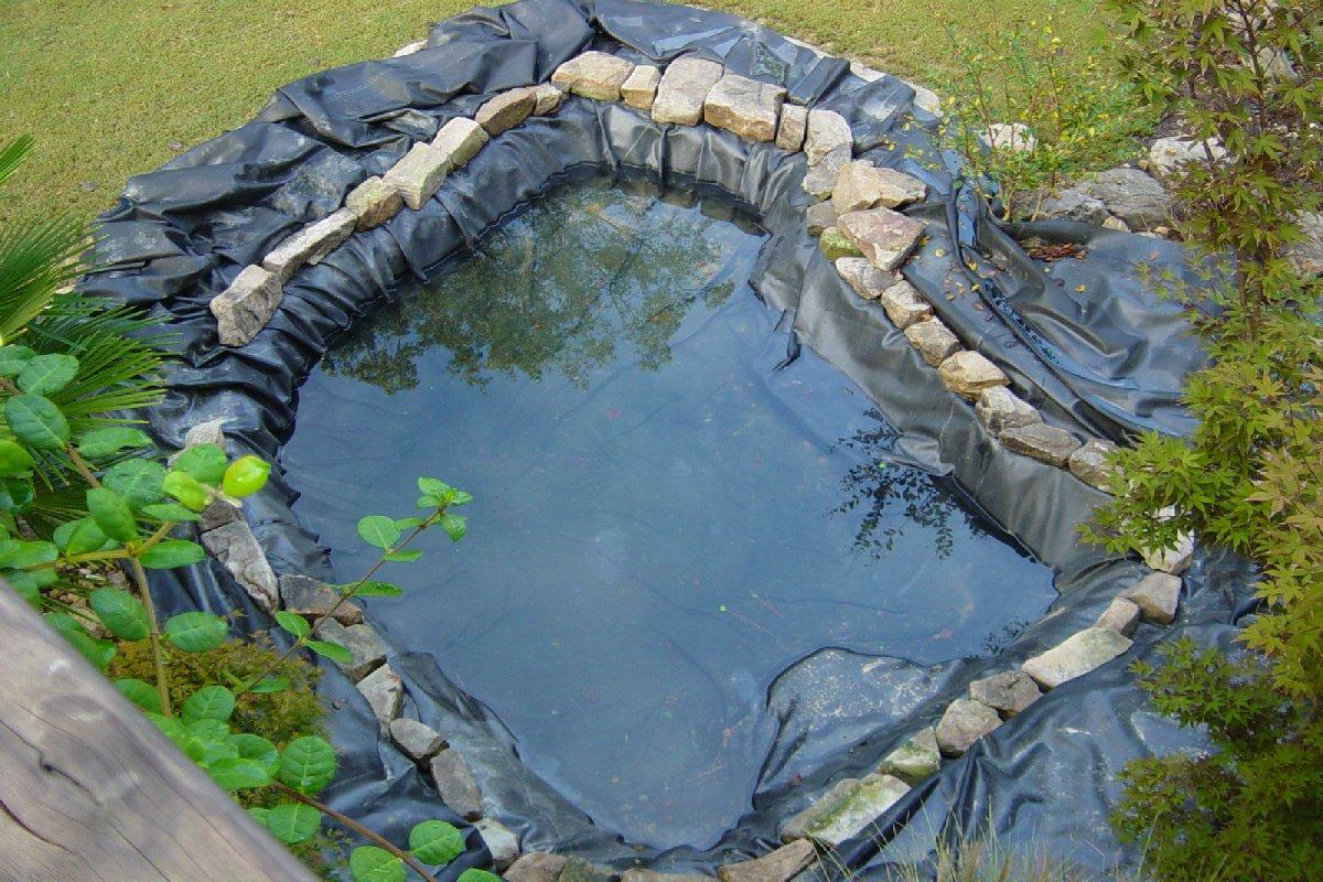 Tilapia Pond Design